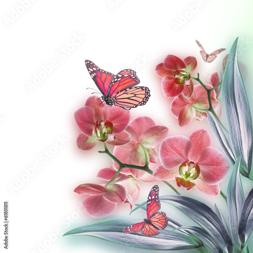 Naklejka na szybę Floral background of tropical orchids and butterfly