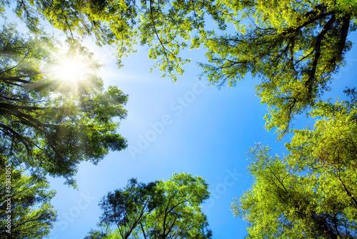 Baumkronen umrahmen den sonnigen Himmel