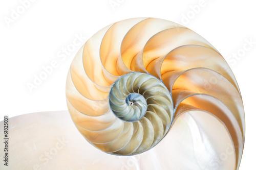Fotobehang Spiraal Nautilus Pompilius vor weißem Hintergrund