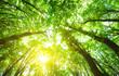 Leinwanddruck Bild - forest trees