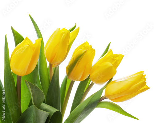 Papiers peints Tulip Flower bouquet from yellow tulips isolated on white background.