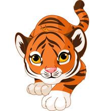 Crouching Baby Tiger