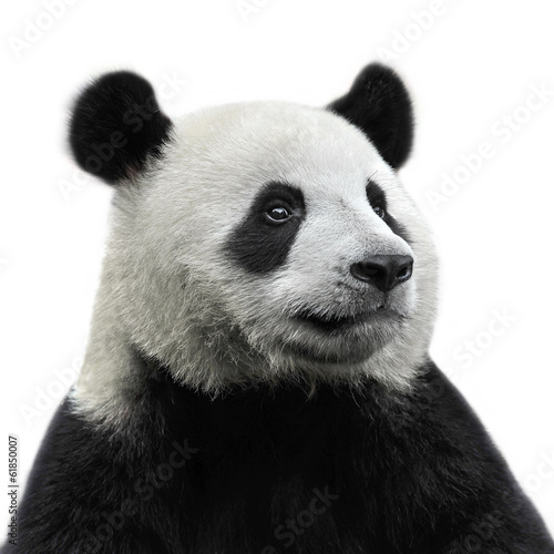 Deurstickers Panda Panda bear isolated on white background