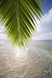 coconut leaf and sea
