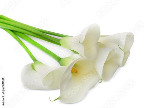 Fotografie, Obraz  calla lily