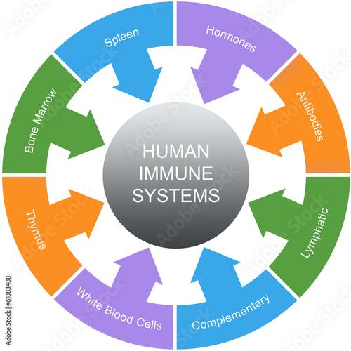 Fotografie, Obraz  Immune System Word Circles Concept