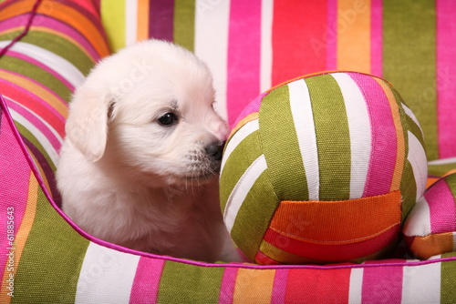 Fotobehang Tuin Golden Retriever Welpe mit Ball