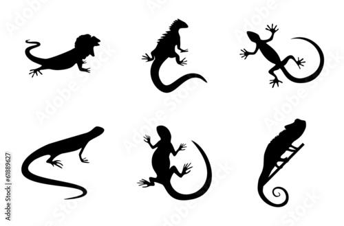 Photo Reptiles