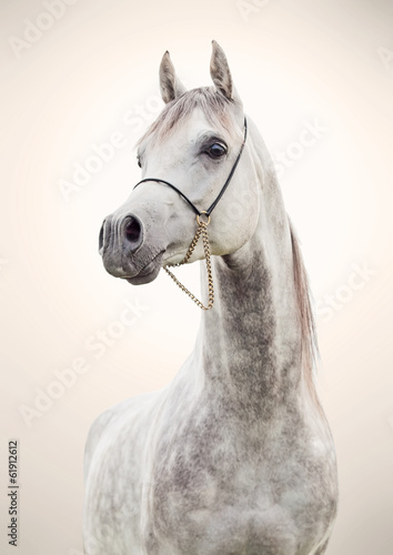 portret-szary-piekny-ogier-arabski-na-tle-sztuki