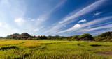 Rice Fields of Bohol