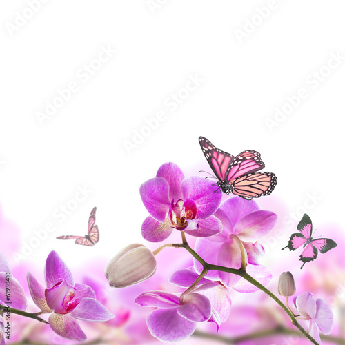 Fototapeta na wymiar Floral background of tropical orchids and butterfly