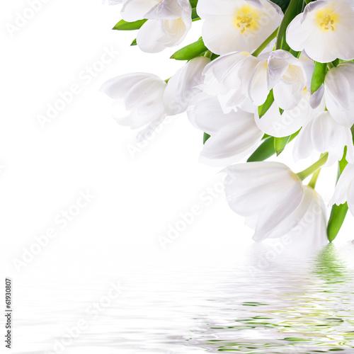 biale-tulipany-z-zielona-trawa-i-motylem-tlo-kwiatowy