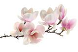 Fototapeta Kwiaty - spring