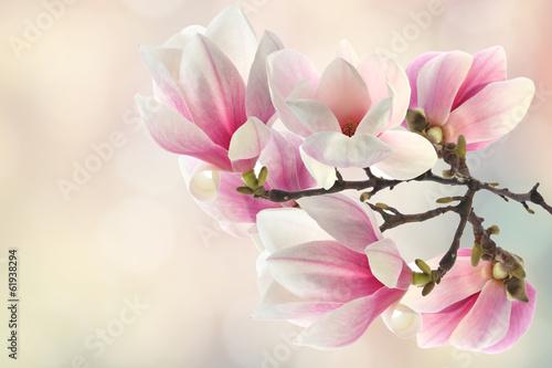 Fototapety, obrazy: spring