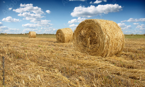 Fotografia, Obraz Hay bale in the countryside