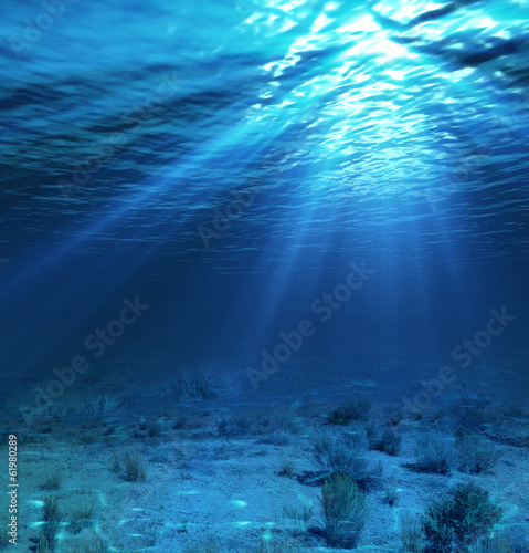 Photo Stands Night blue underwater landscape and backdrop with algae