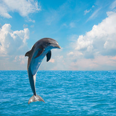 Fototapeta Delfin one jumping dolphins