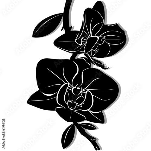 kwiaty-orchidei-jest-izolowany