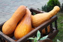 Wagon Full Of Pumpkins