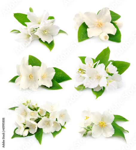 Valokuvatapetti Set of  jasmine