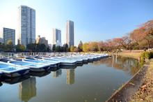 Lake In Ueno Park, Tokyo