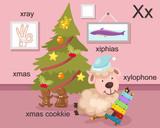 Alphabet X letter,xray,xmas,xm as cookkie,xylophone,xiphias