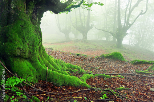 closeup of tree roots with moss on forest