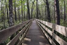 Long Boardwalk At Swamp Slough Preserve