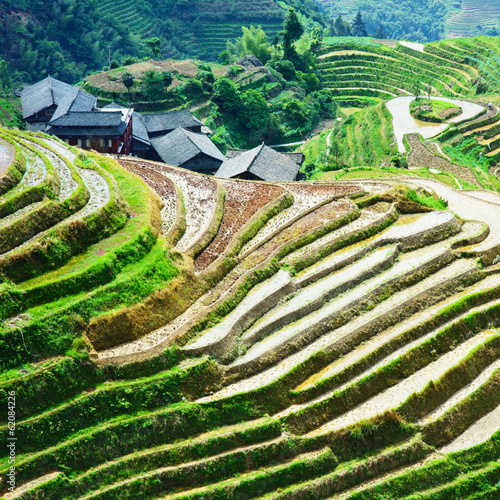 Canvas Prints Guilin Rice Field in China - LongJi