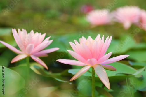 Recess Fitting Lotus flower flowers