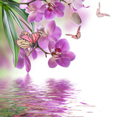 Panel Szklany Storczyki Floral background of tropical orchids and butterfly