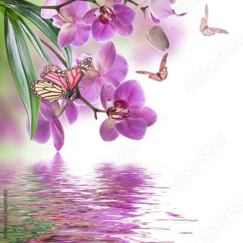 Tuinposter Orchidee Floral background of tropical orchids and butterfly