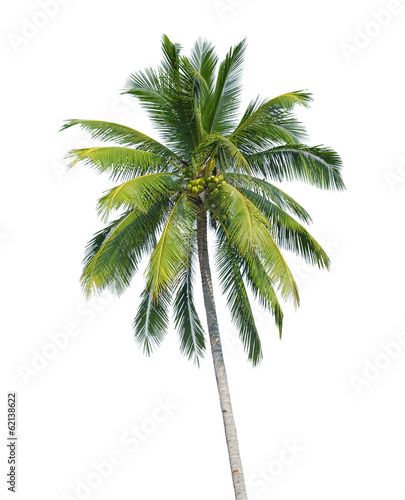 In de dag Palm boom coconut tree