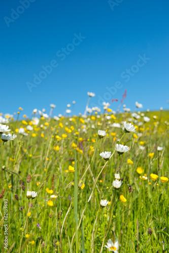 Foto op Plexiglas Landschappen Wild flowers in summer