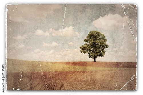 Papiers peints Retro Vintage Photograph of Tree