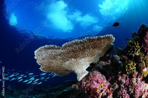 Fotografie, Obraz  underwater landscape