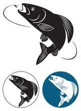 Grayling Fish
