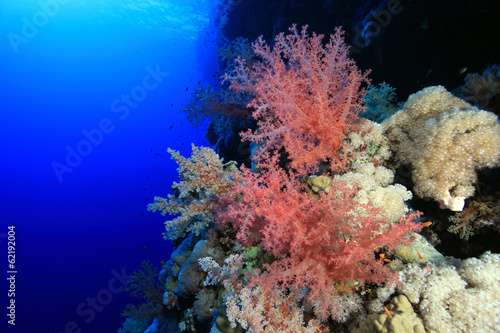 Tuinposter Koraalriffen Soft coral in the tropical reef of the red sea