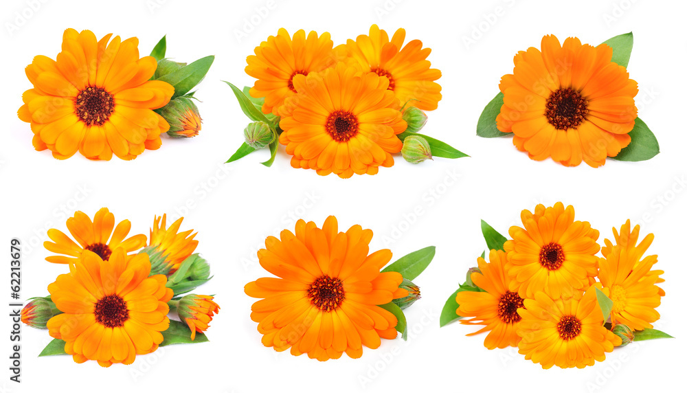 Fototapety, obrazy: Collage of marigold flowers