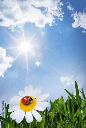 Papiers peints Narcisse chamomile and ladybug
