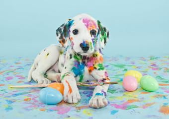 Fototapeta Easter Dalmatain Puppy