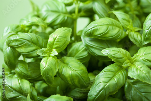 Canvas Prints Condiments fresh basil leaves