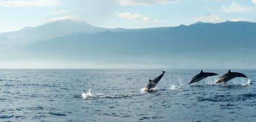 FototapetaDolphins in Pacific Ocean