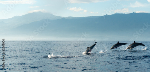 Photo sur Aluminium Dauphin Dolphins in Pacific Ocean