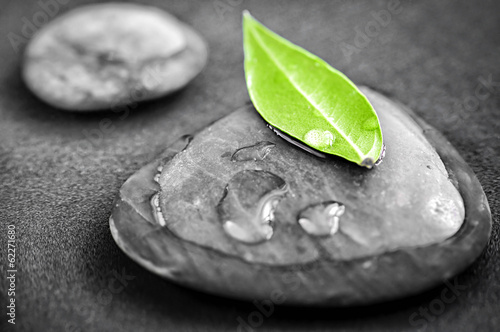 Stones with green leaf