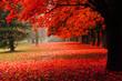 Leinwandbild Motiv red autumn in the park
