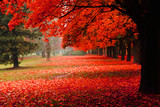 Spaziergang im Herbstpark