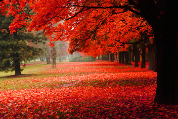 red autumn in the park