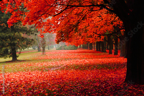 Poster Bomen red autumn in the park