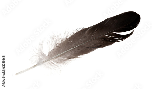 singke isolated black straight feather